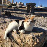 ギリシアで出会ったネコたち Part.1