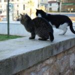 ギリシアで出会ったネコたち Part.2