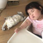 【育児記録57】1歳10ヶ月になりました!&日本への一時帰国が決まりました♡